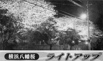 横浜八幡桜 ライトアップ