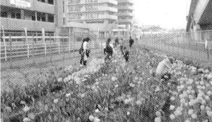 チューリップ祭りのご案内 農楽苦会(のらくろかい)