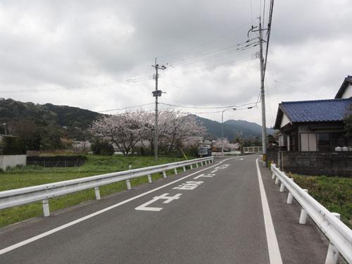 今宿桜風景2017年