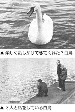 今津湾は白鳥の水海(みずうみ)