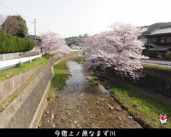 2018年今宿桜風景